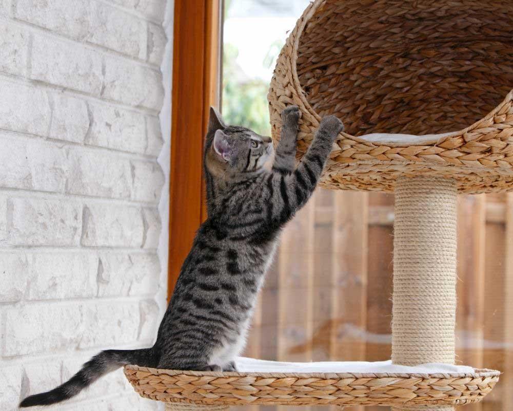 kako napraviti grebalice za mačke