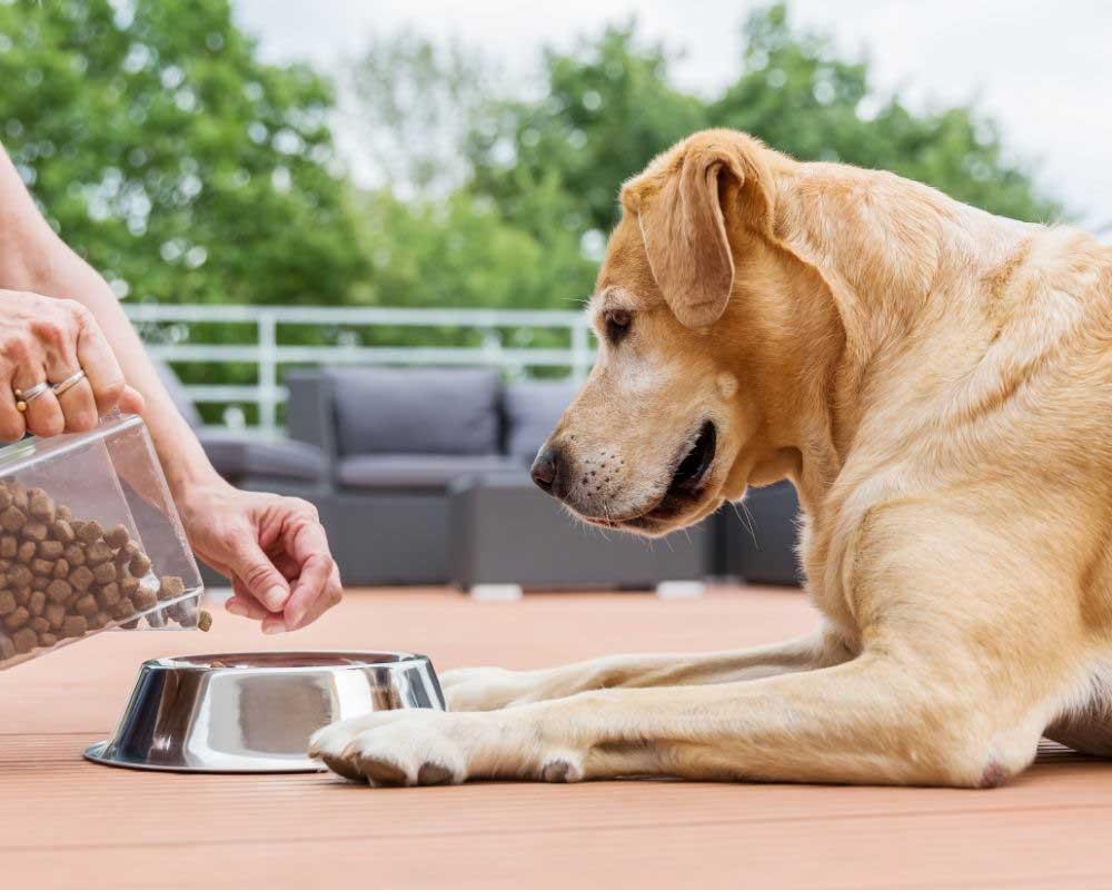 zašto je važan kalcijum za pse