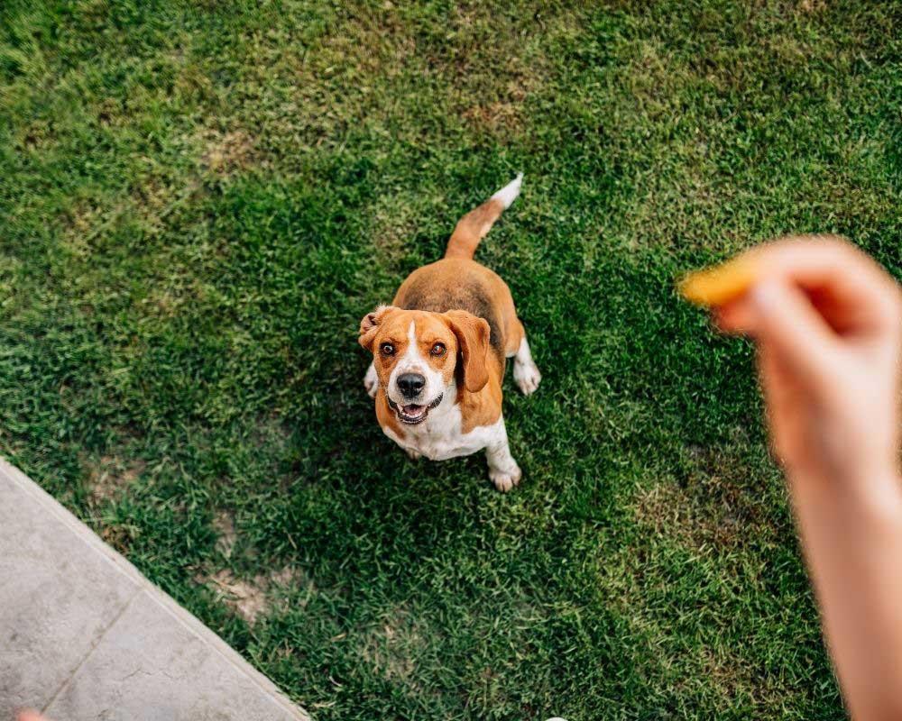 kalcijum tablete za pse