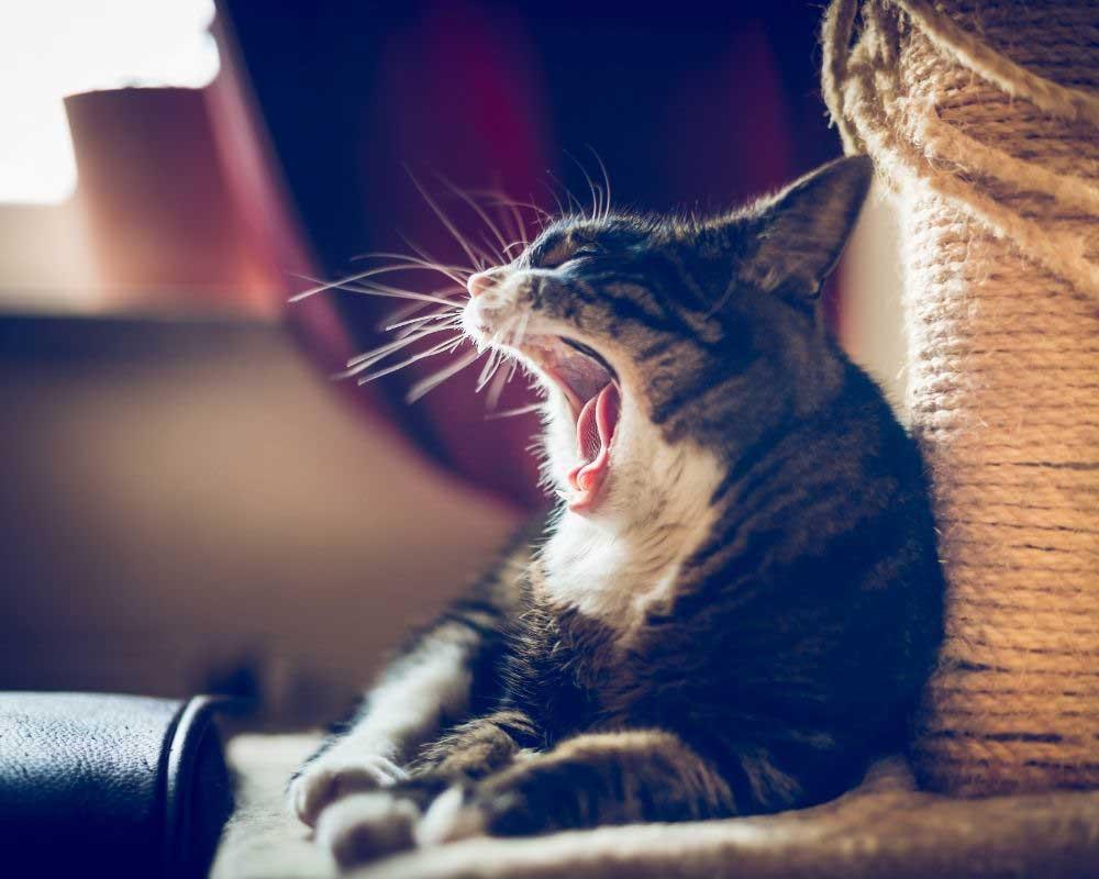 mački smrdi iz usta