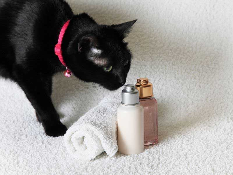 šampon za mačke za buve