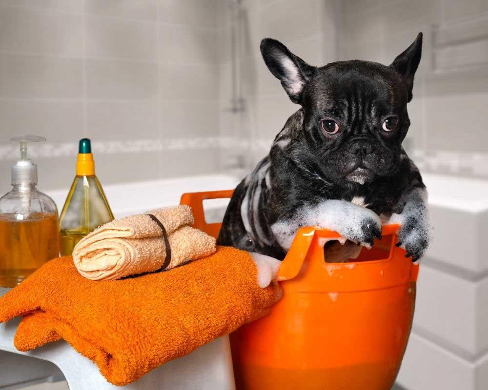 kako se koristi balzam za pse