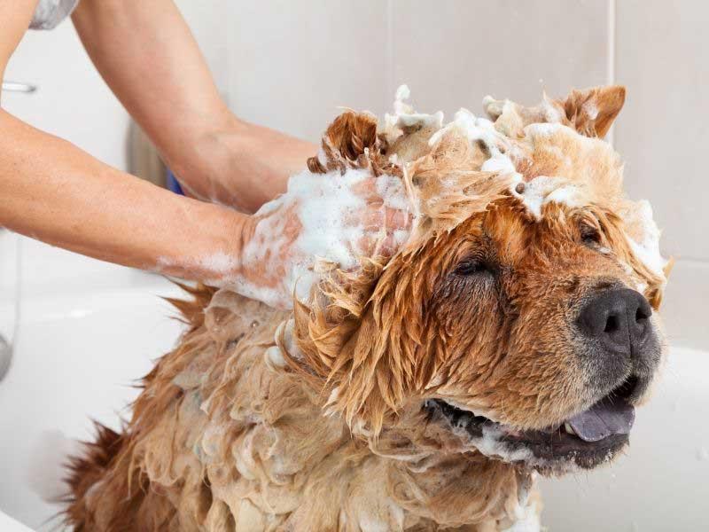 najbolji šampon za pse