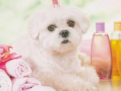 šampon za pse