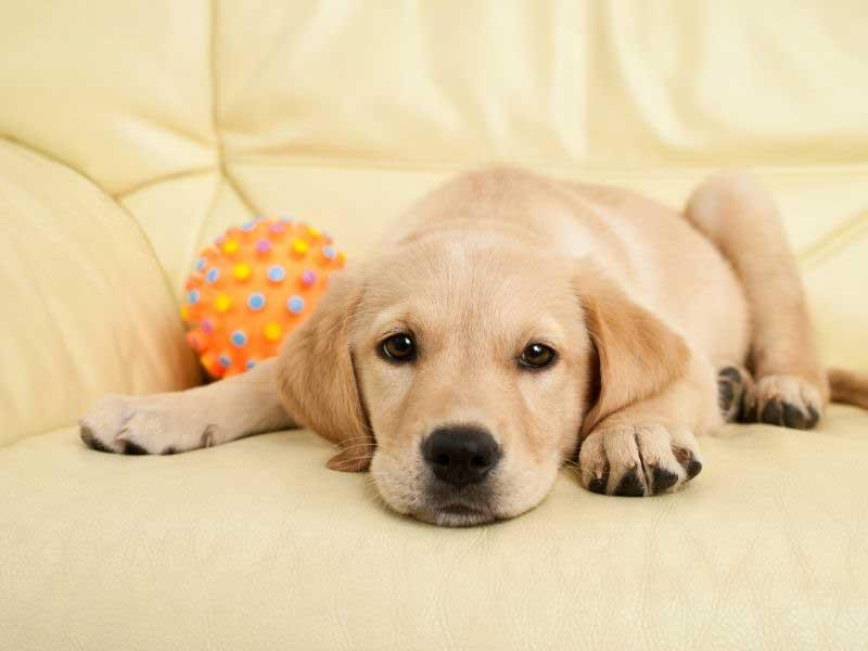 najbolji psi za decu sa alergijama