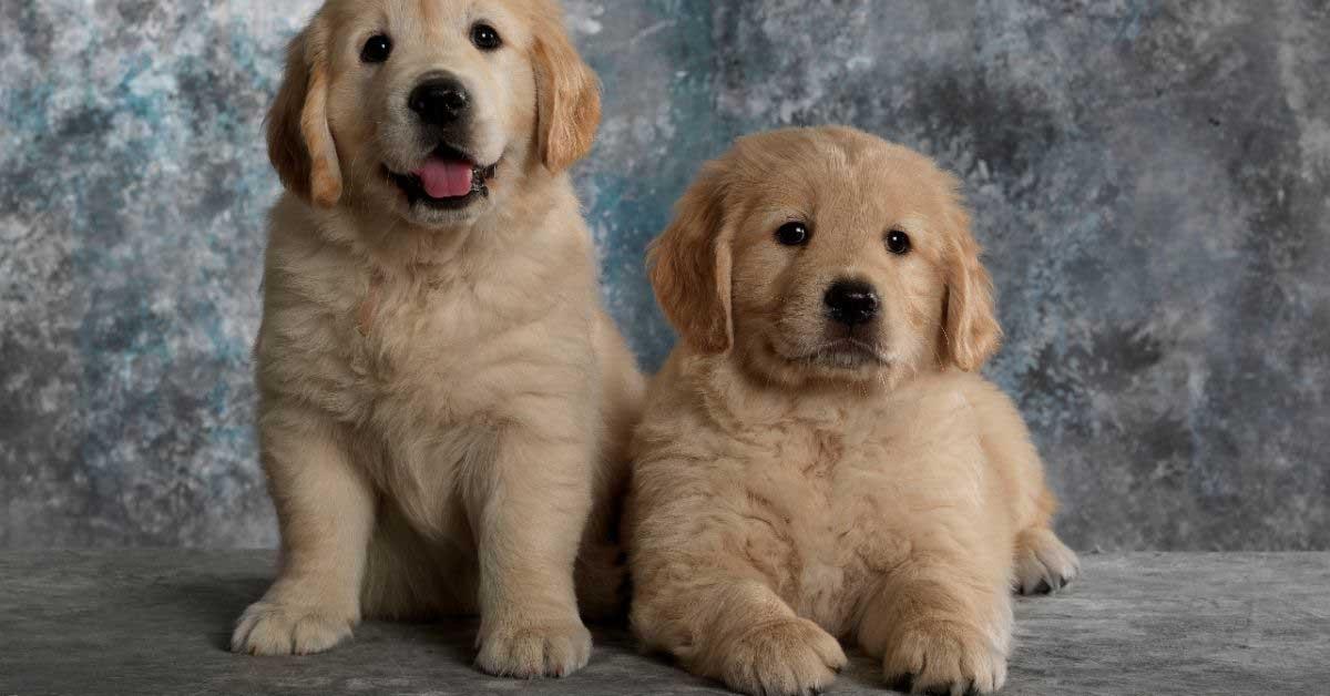 najbolji psi za decu