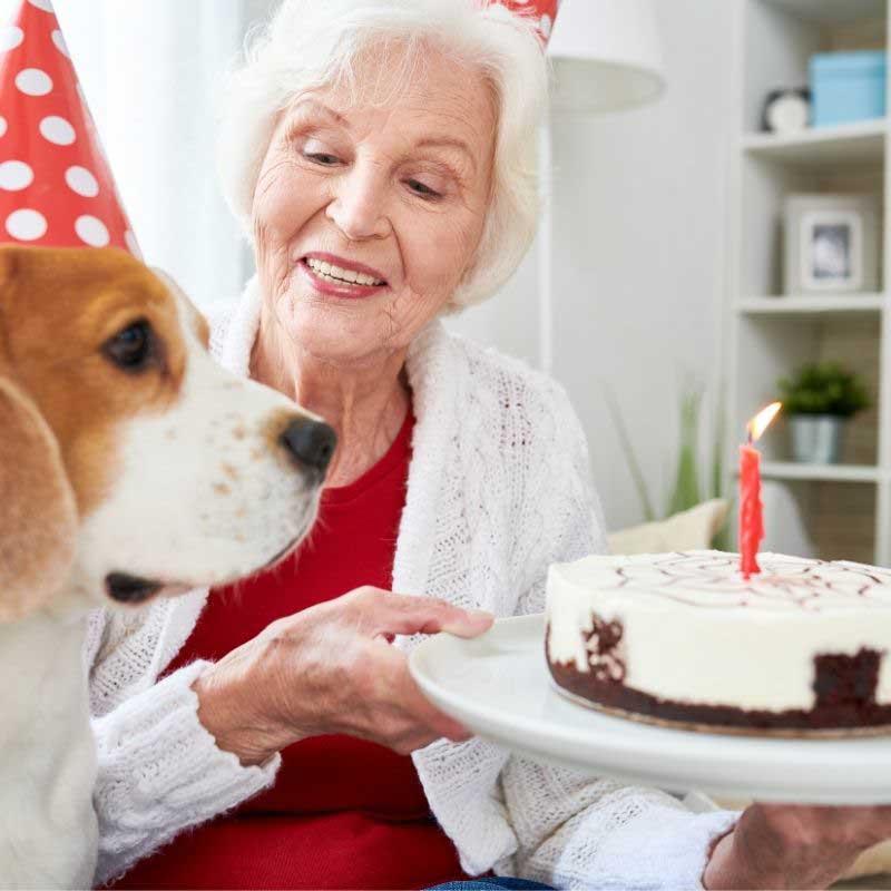 jednostavna torta za pse