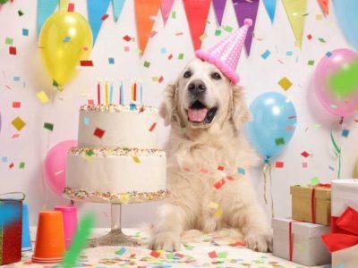 torta za pse