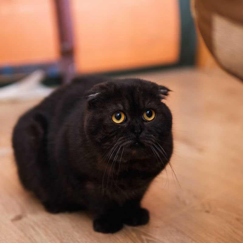 strah kod mačaka simptomi