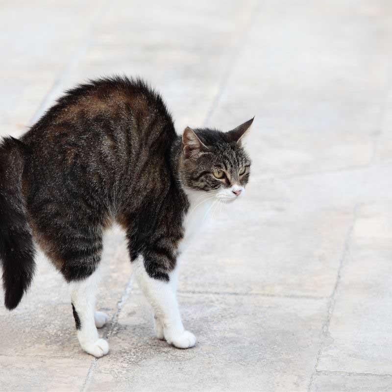 mačka se plaši