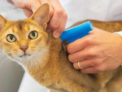 čipovanje mačaka
