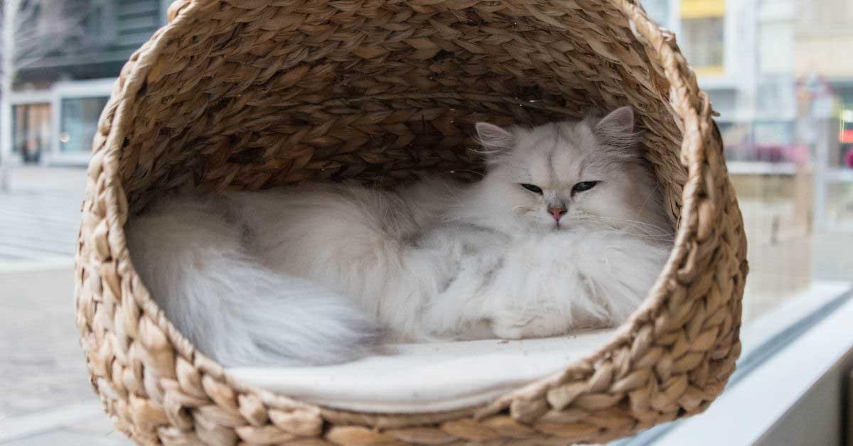 kako napraviti krevet za mačke