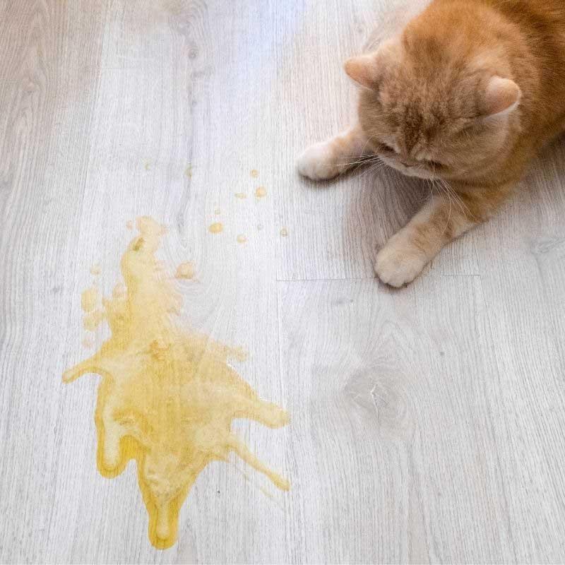 zašto mačka povraća