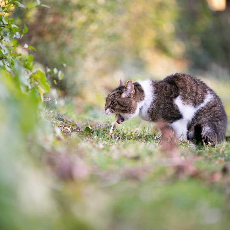 mačka povraća i kašlje