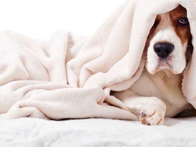 bolesti pasa