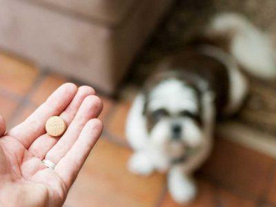 vitamini za pse