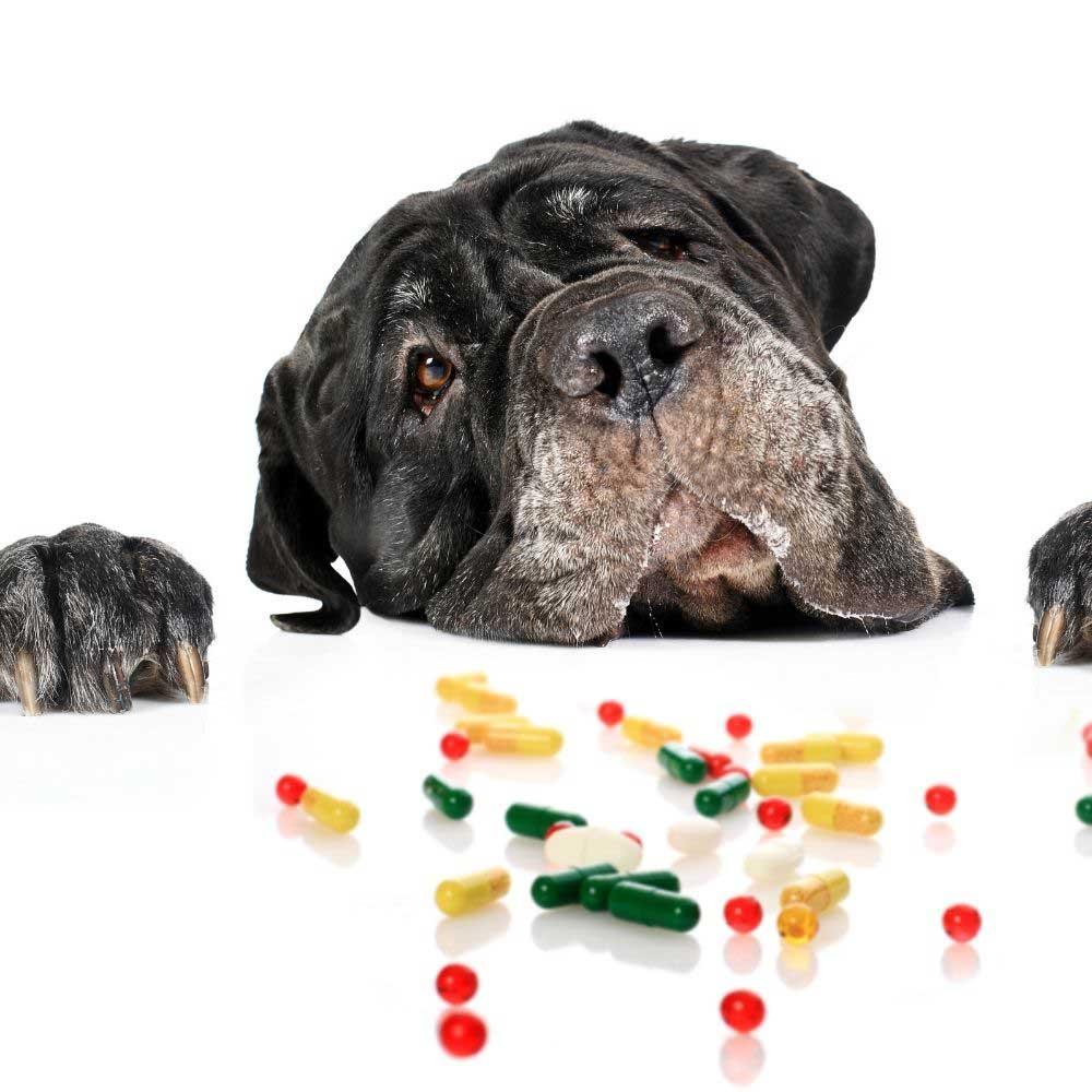 vitamini za dlaku pasa