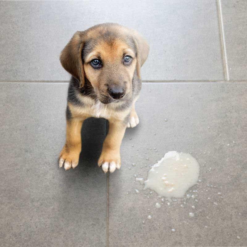 povraćanje kod pasa terapija