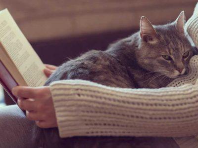 zašto mačka prede