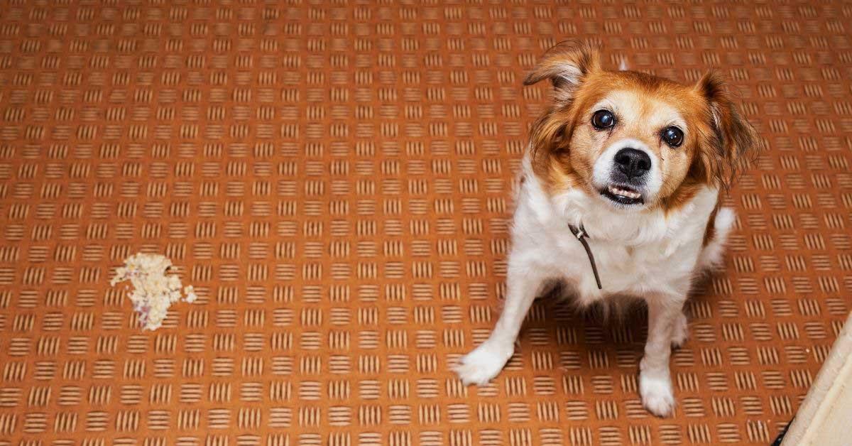 povraćanje kod pasa