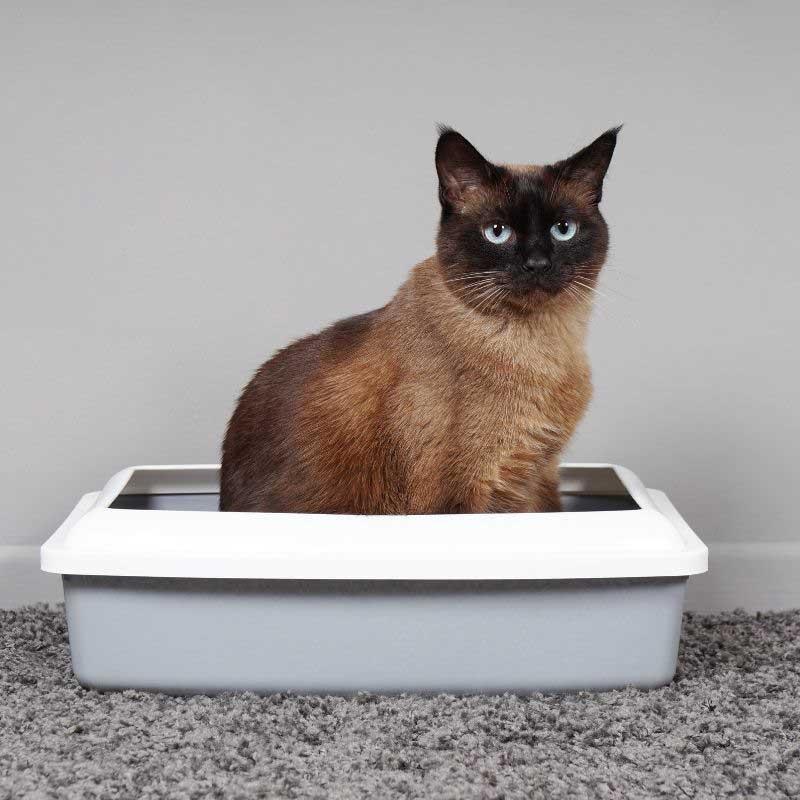 kako se čisti posip za mačke