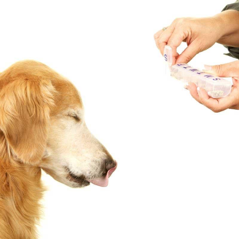 Kako se koristi K vitamin za pse