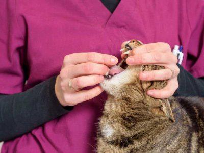 kako mački dati tabletu