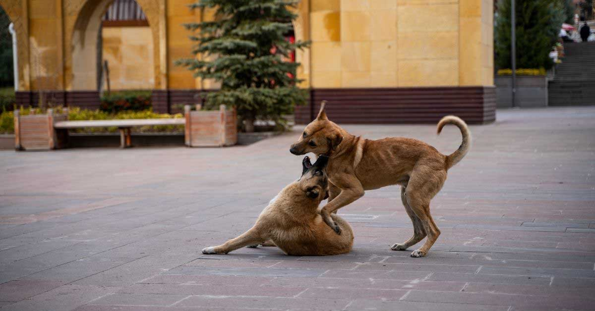 teranje kod pasa