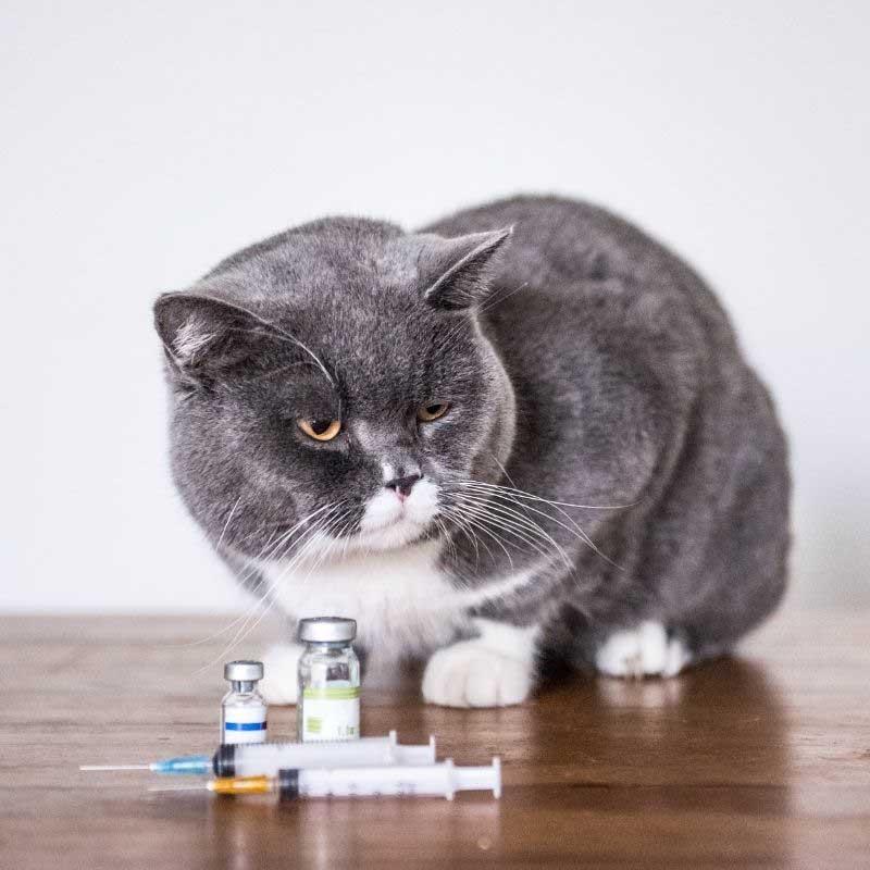 kožne bolesti mačaka