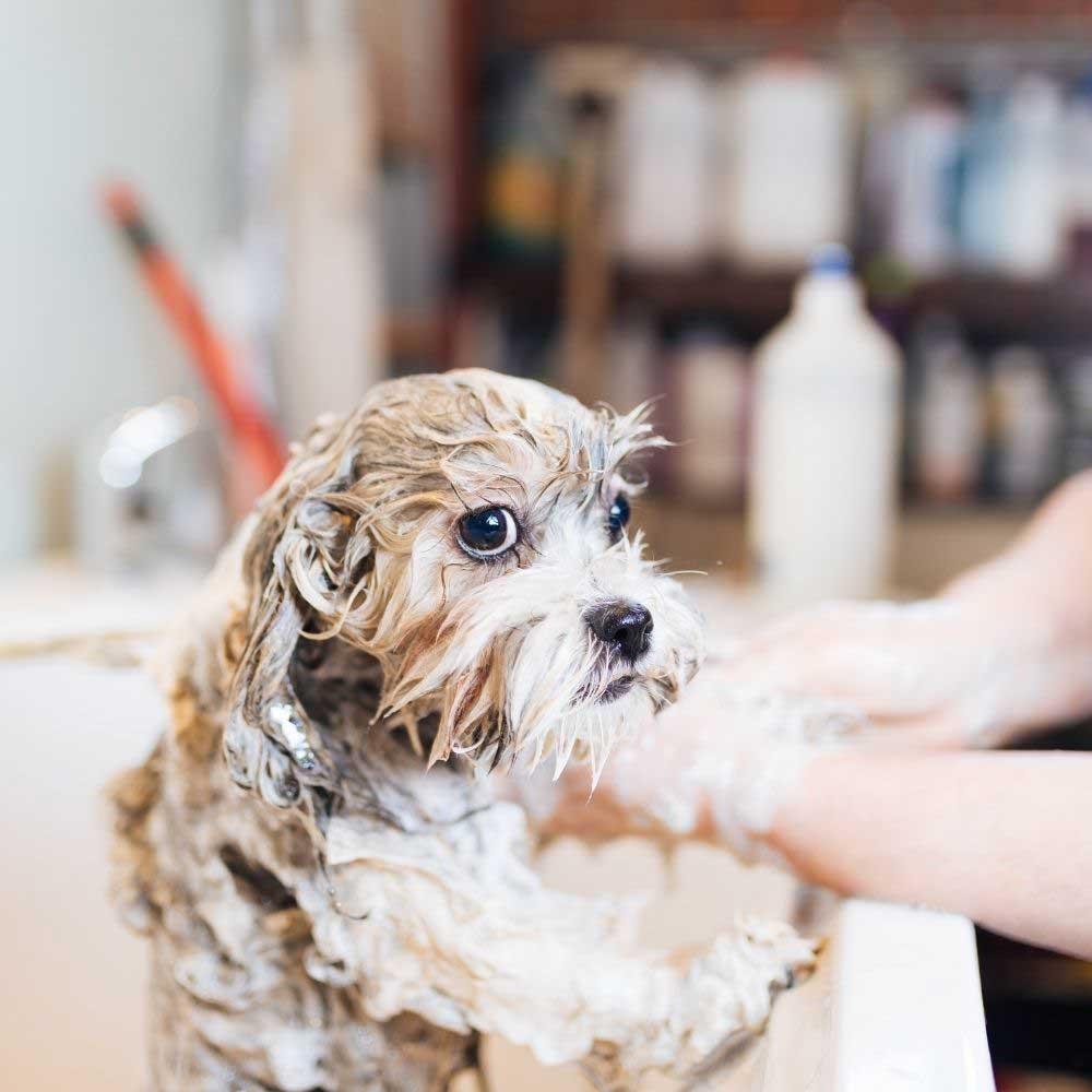 kupanje nemirnog psa