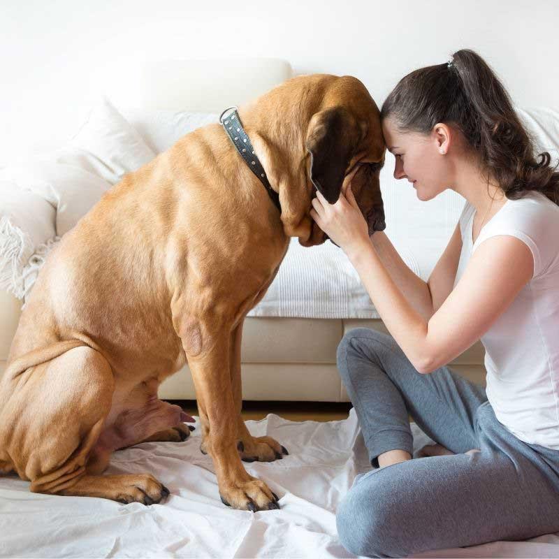 velike rase pasa za stan