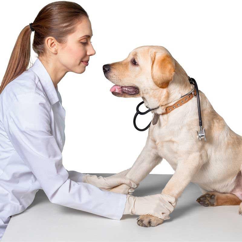 alergije pasa na buve