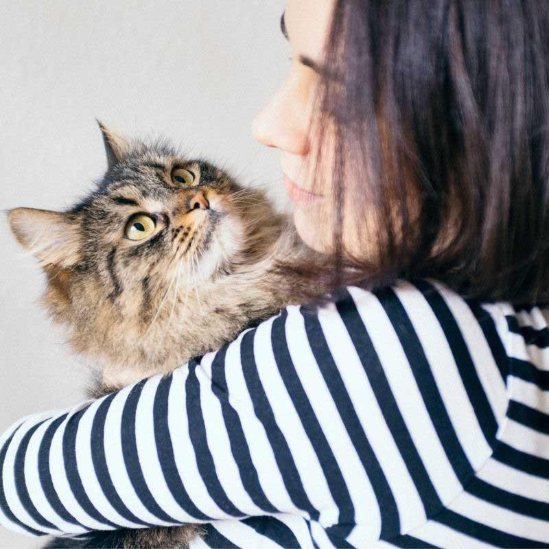 kašalj kod mačaka simptomi