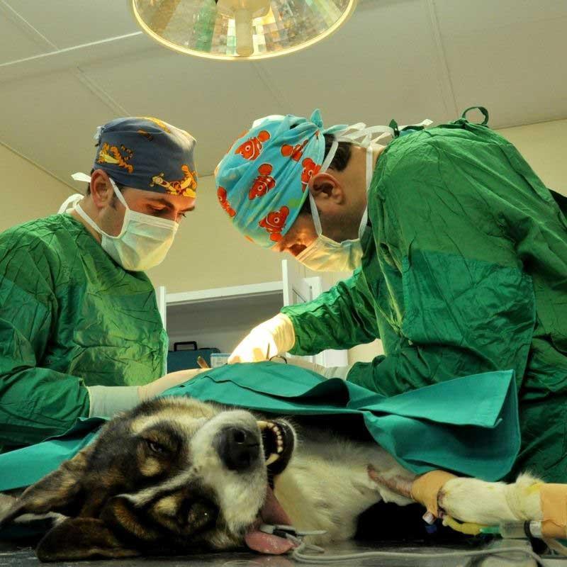 sterilizacija pasa
