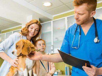 sterilizacija kod pasa