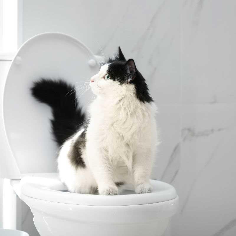 zatvor kod mačaka simptomi