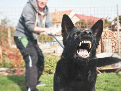 agresivnost kod pasa