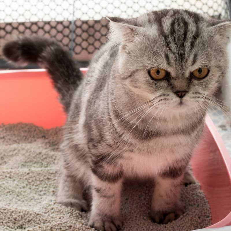 zatvor kod mačaka lečenje