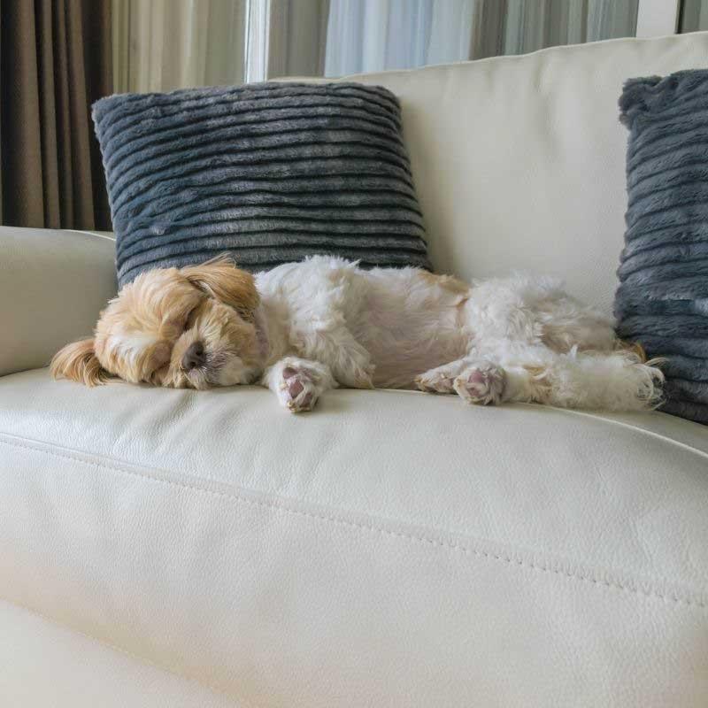 poremećaj sna kod pasa uzrok