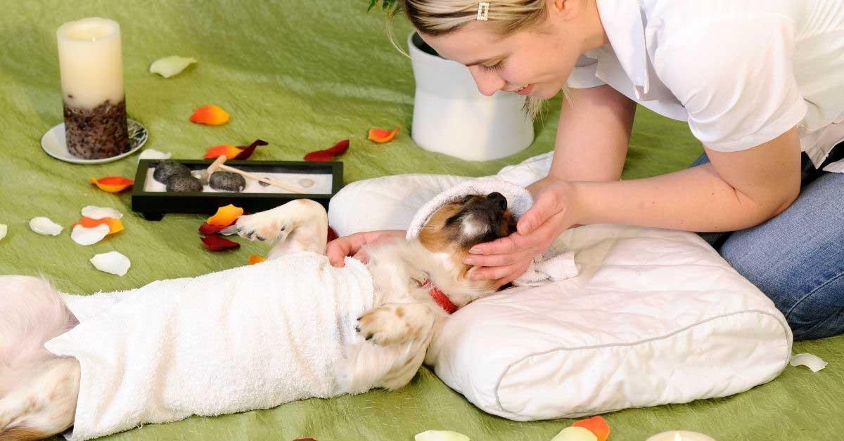 poremećaj sna kod pasa