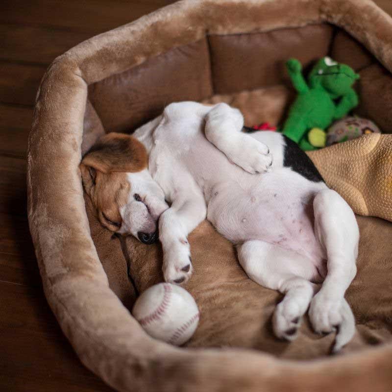 poremećaj sna kod pasa simptom