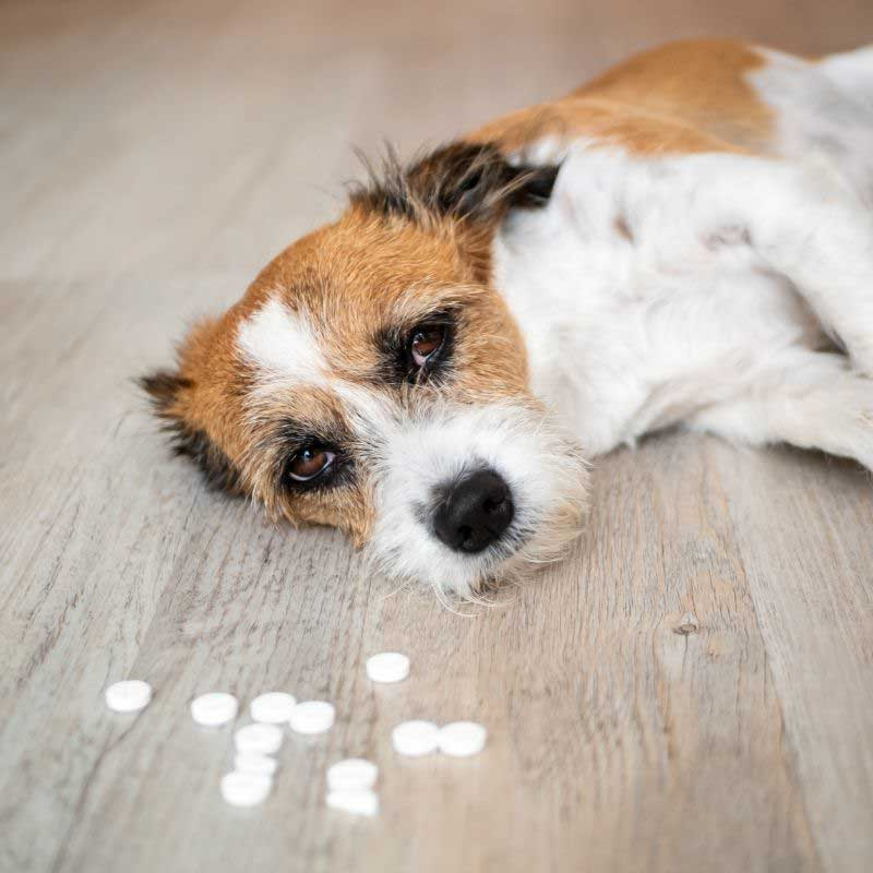 trovanje pasa lekovima