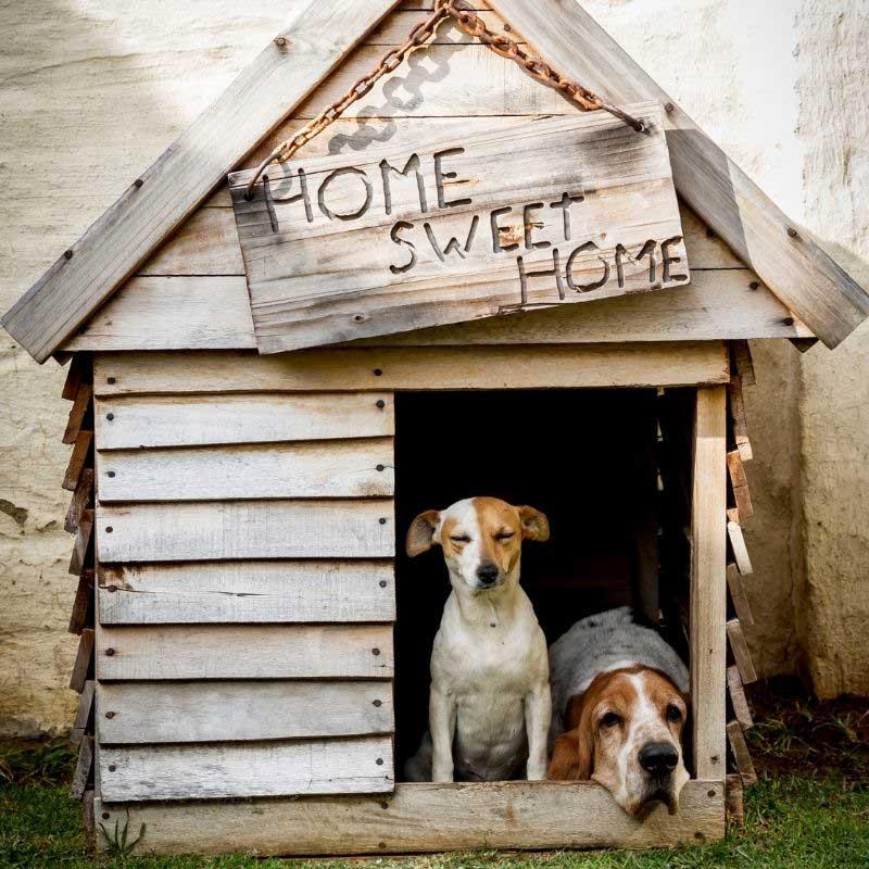 kućica za pse od paleta