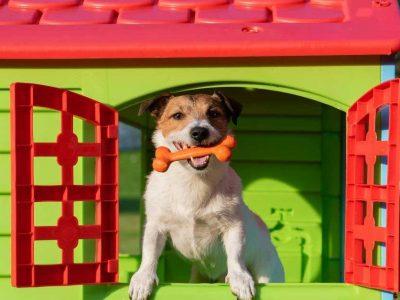 kako napraviti kućicu za pse