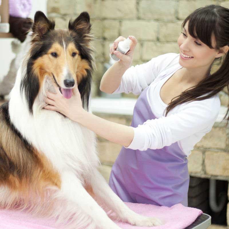 prirodni lek kod pasa protiv krpelja
