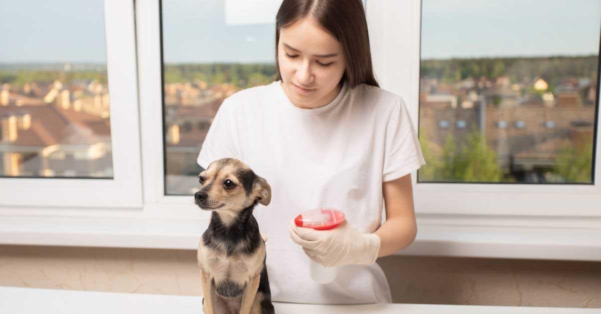 prirodni lek protiv krpelja kod pasa