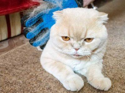perut kod mačaka