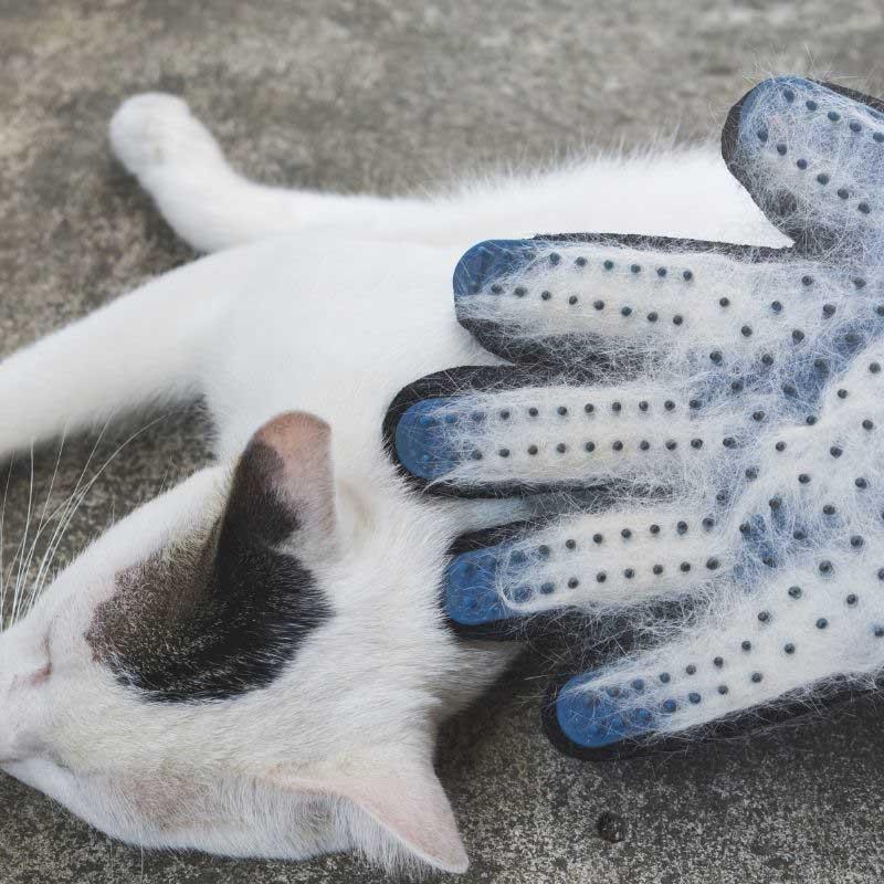 perut kod mačaka simptomi
