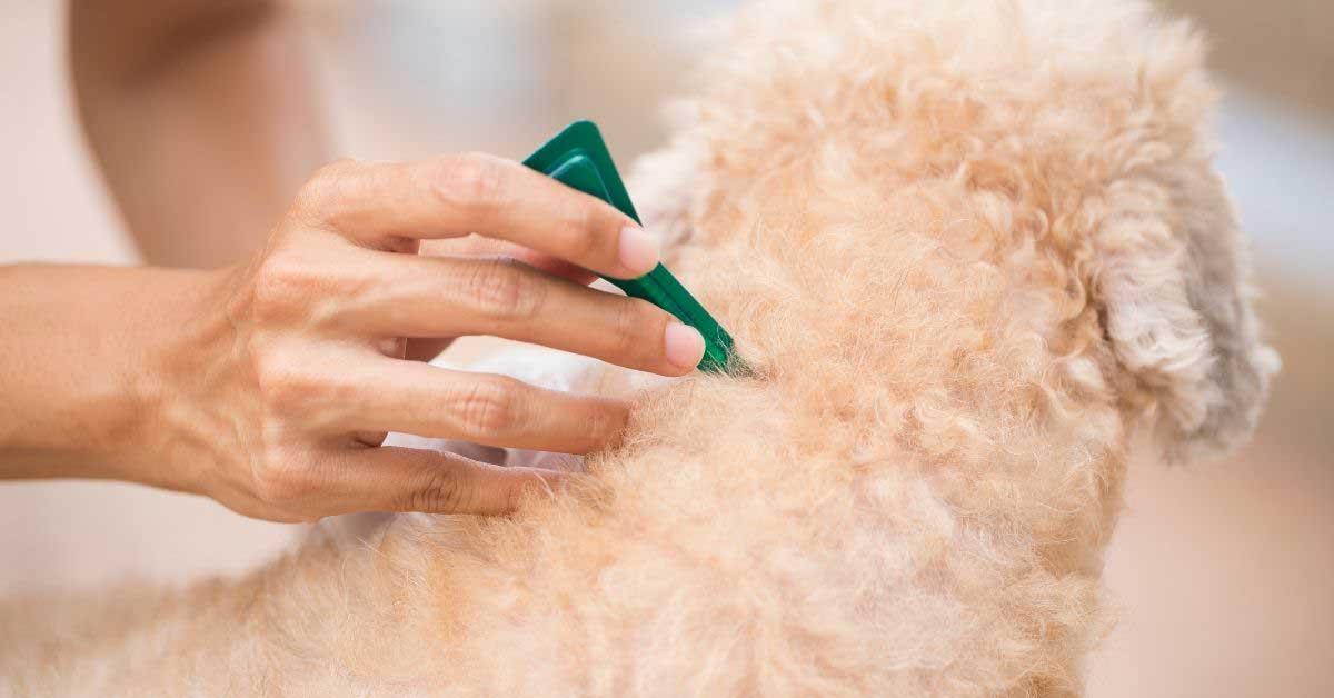 preparati protiv krpelja kod pasa