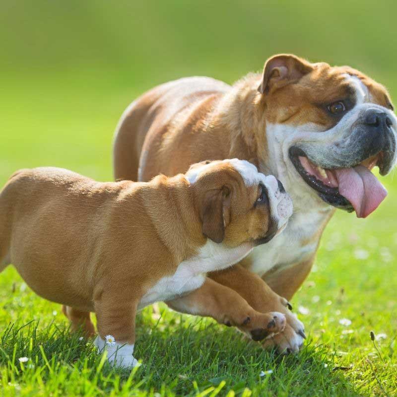 prerano odvajanje štenaca od majke